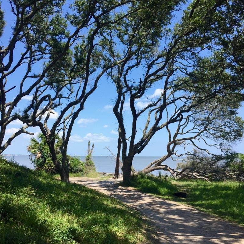 Path to Driftwood Beach, Jekyll Island