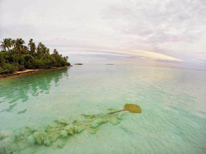 Top 7 Coral Reefs You MUST Visit