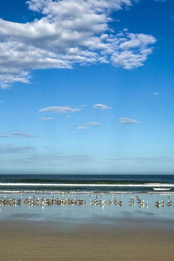 Birds along Daytona Beach - Coastal Wandering