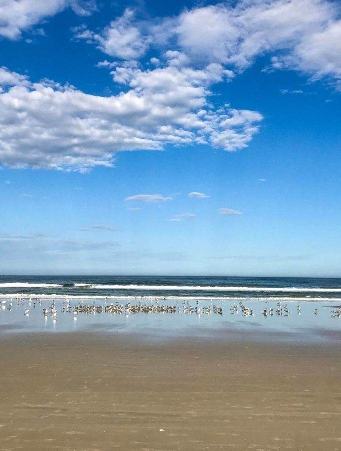 Birds on Daytona Beach - Coastal Wandering