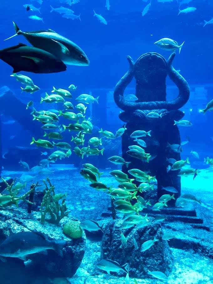 Atlantis aquarium in the Bahamas - Coastal Wandering