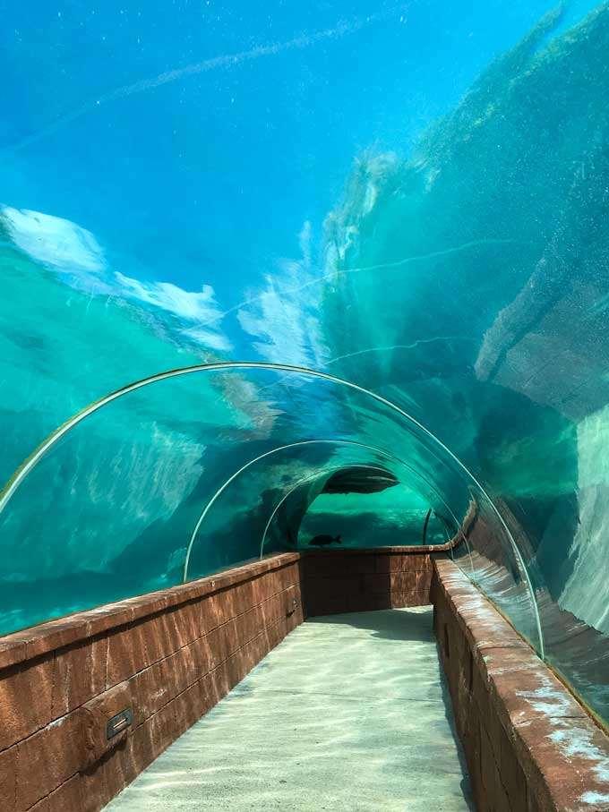 Atlantis aquarium underwater tunnels in the Bahamas - Coastal Wandering