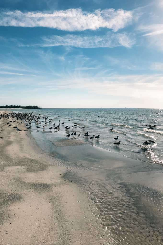 St. Petersburg Florida Fort De Soto Beach Birds - Coastal Wandering