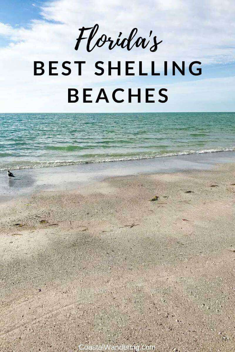 The 10 Best Shelling Beaches in Florida