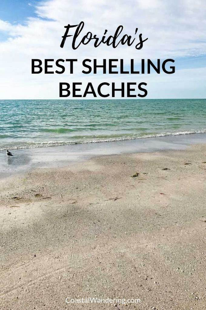 Best Shelling Beaches in Florida - Coastal Wandering