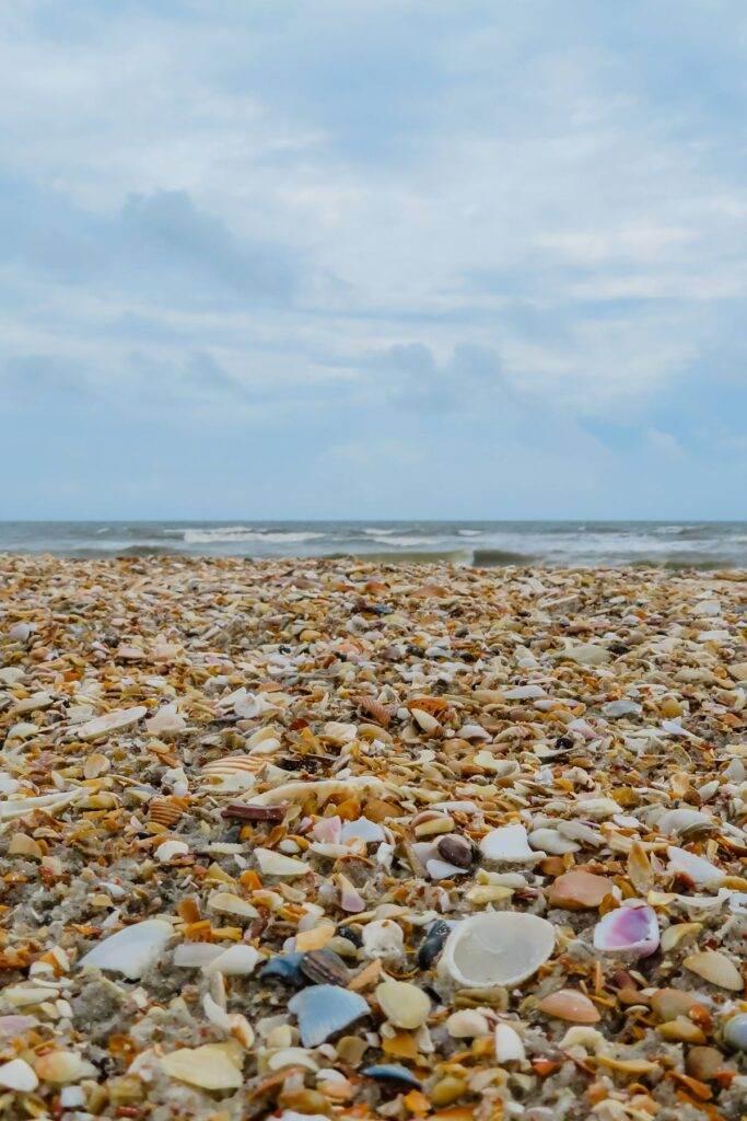 Shell beach in Florida
