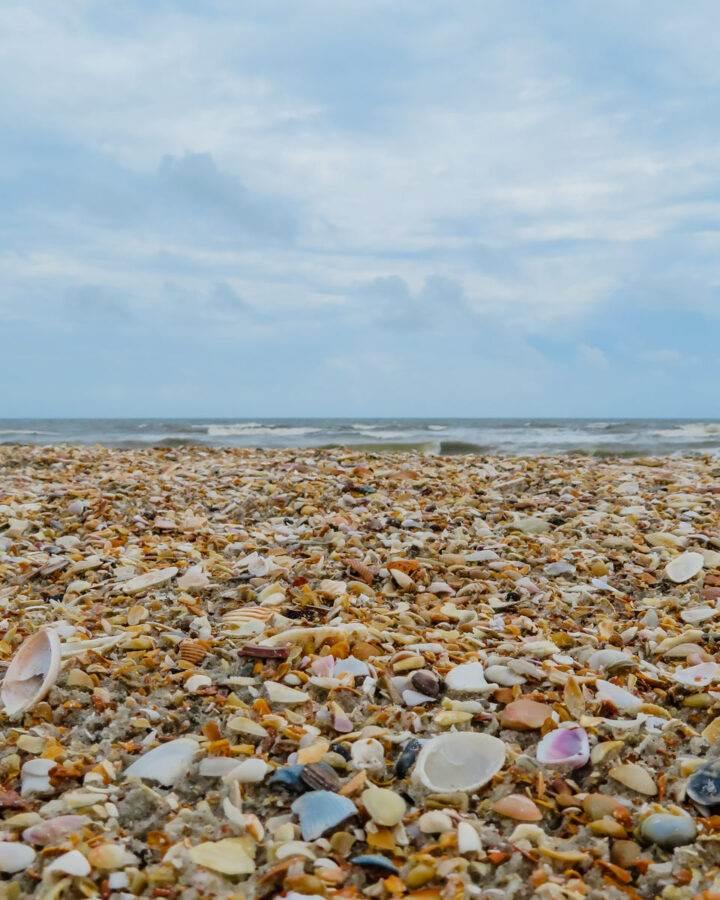 Shelling beach in Florida