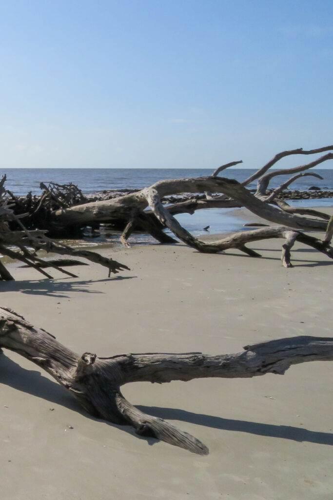 Driftwood Beach - Jekyll Island, GA