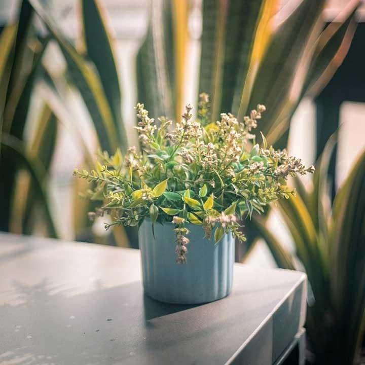 Spring decor DIY ideas