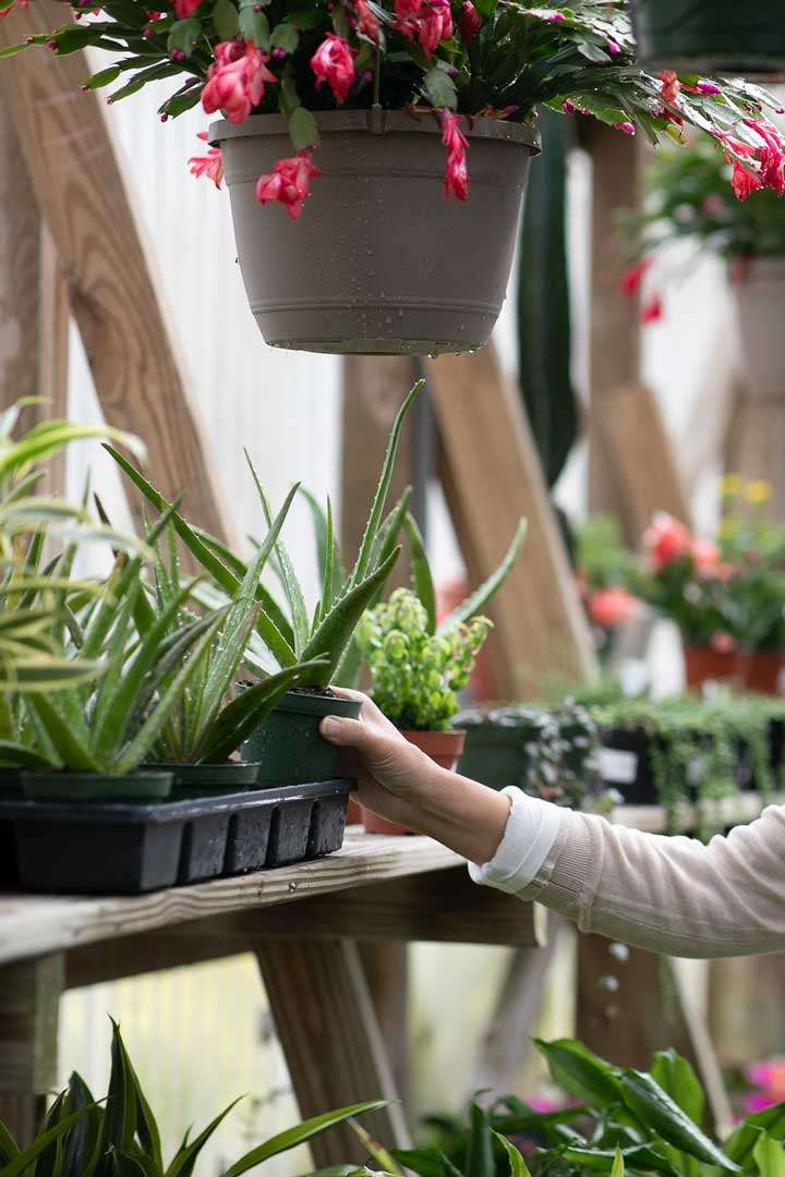Hanging flower pots and potted plants