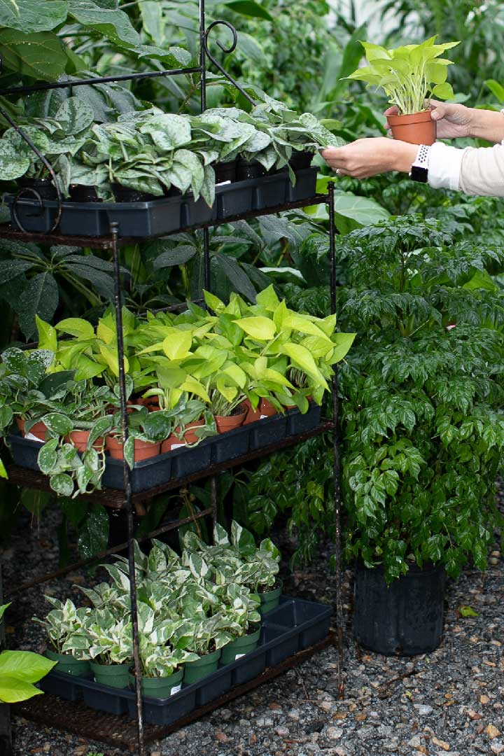 Plants in containers on stand