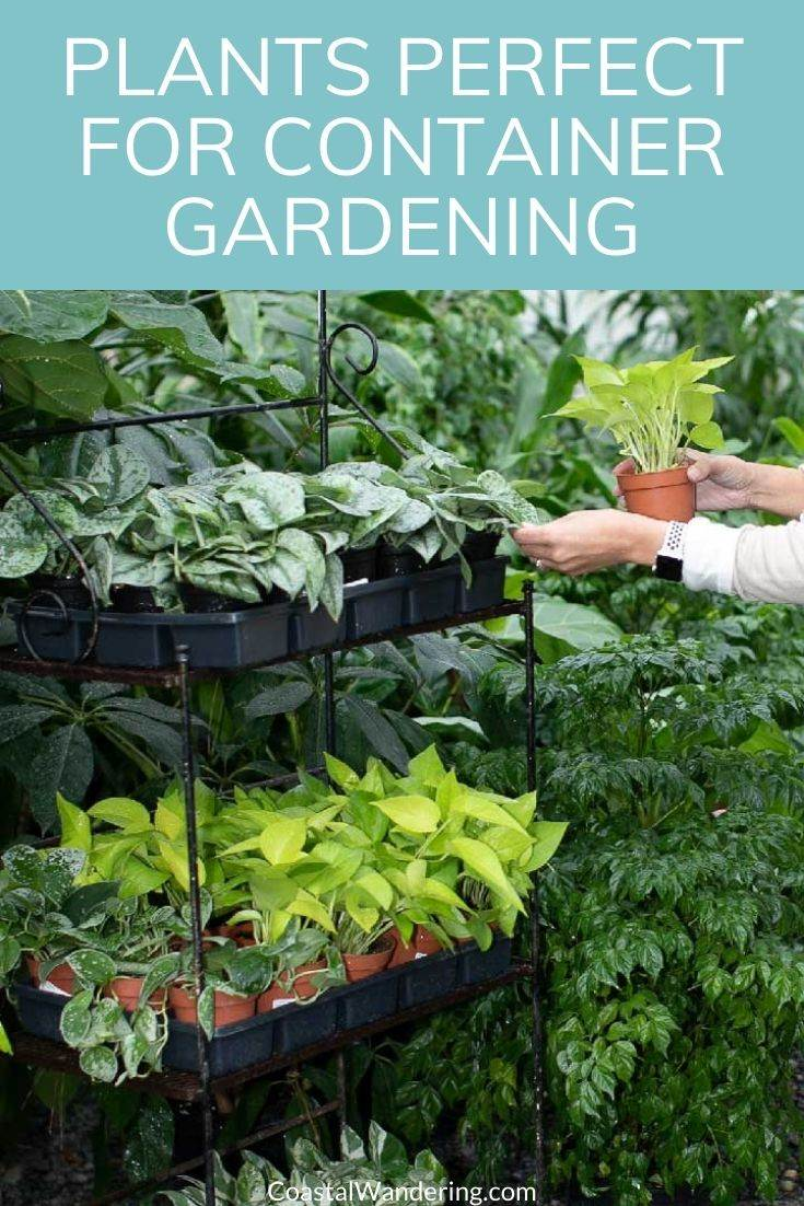 12 Easy To Grow Plants Perfect For Container Gardening